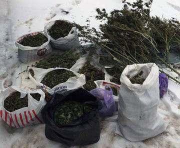 У ковшаровца нашли 12 килограммов марихуаны