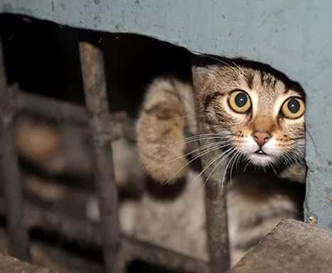 В Киеве бездомных котов признали частью экосистемы