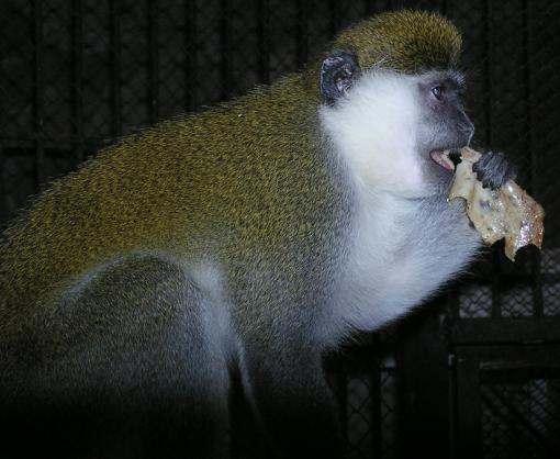 В харьковском зоопарке отпраздновали Масленицу: кому достались блины