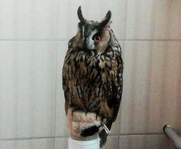 В харьковском центре обращения с животными поселилась сова