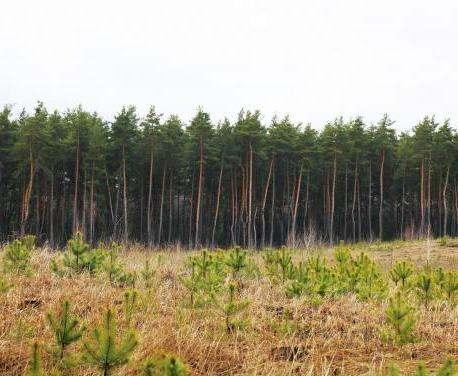 В Харьковской области высадят 4,5 миллиона лесных культур