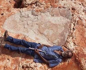 Найден самый большой в мире след живого существа