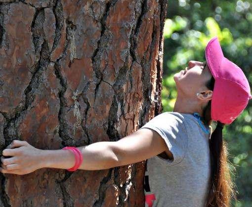 Деревья умеют общаться друг с другом