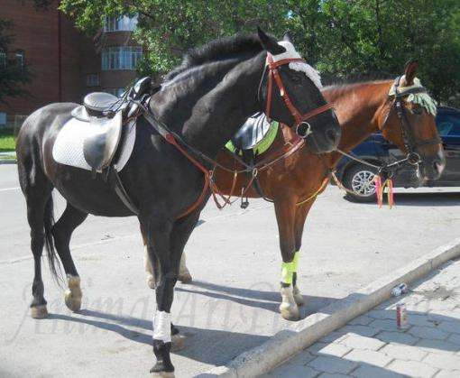Харьковчане просят убрать с улиц лошадей