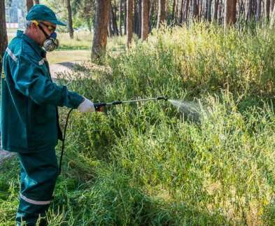 В Харькове будут бороться с аллергенами новым способом