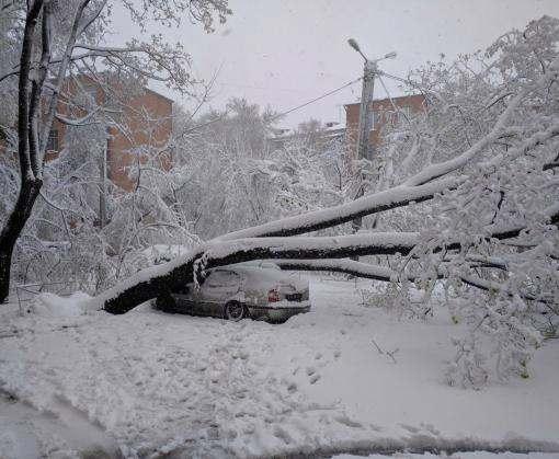 В Харькове из-за сильного ветра и снега падают деревья