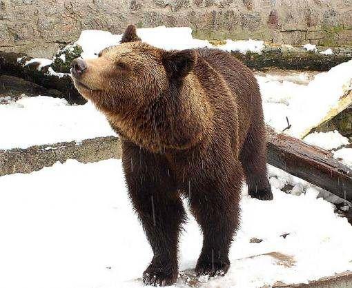 Как звери в харьковском зоопарке отреагировали на непогоду