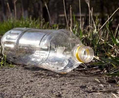 Ученые нашли гусениц, которые помогут утилизировать пластик