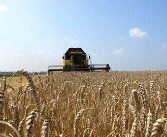 В Харьковской области планируют собрать рекордный урожай