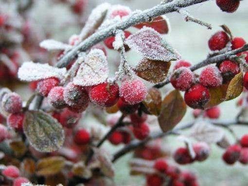 Погода в Украине: майские заморозки