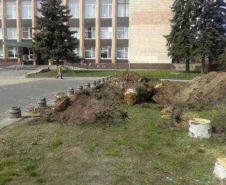 Чиновники горсовета понесут наказание за снос деревьев