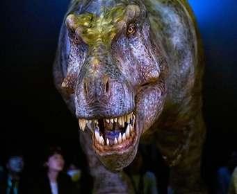 Назван обладатель самых смертоносных челюстей в истории