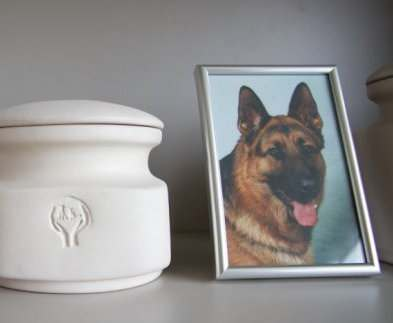 В Харькове будет кладбище домашних животных