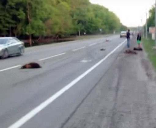 ДТП в Харькове: погибших разбросало по шоссе