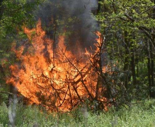 Спасатели предупреждают о чрезвычайном уровне пожароопасности в Украине