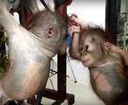 Ученые назвали главное отличие человека от животного
