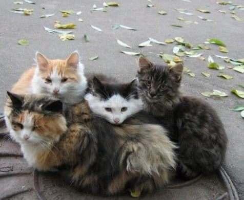 Власти Киева признали право котов жить в подвалах