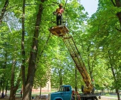 В Харькове обезвредили опасные деревья