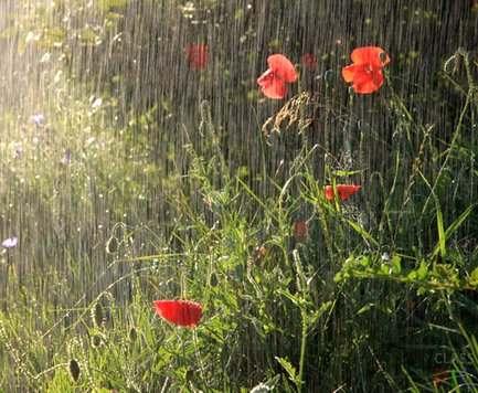 Погода в Харькове: ожидается дождь