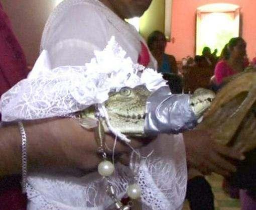 В Мексике мэр женился на крокодилице
