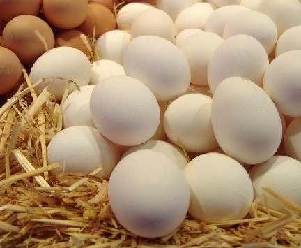 В Харьковской области увеличилось производство молока и яиц – облстат