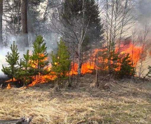В Украине объявлена чрезвычайная пожарная опасность