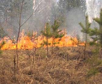 В Харьковской области наблюдается чрезвычайная пожароопасность