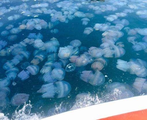 Западное побережье Крыма атаковали стаи медуз
