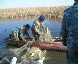Инспекторы изъяли более тонны рыбы