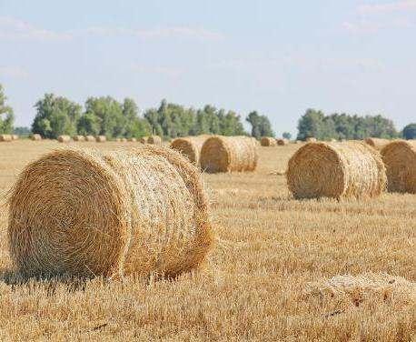 На Харьковщине собрали 2 миллиона тонн зерна