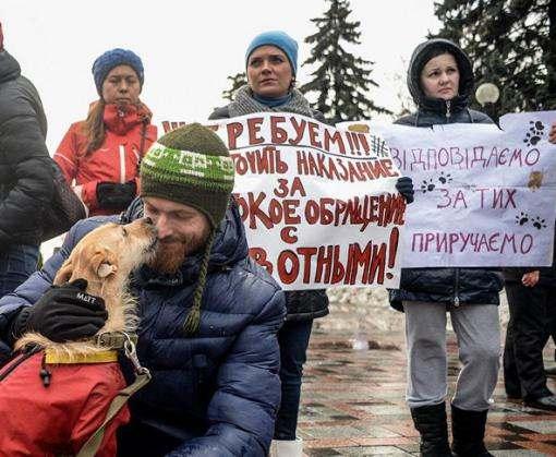 С сегодняшнего дня в Украине будут жестче наказывать живодеров