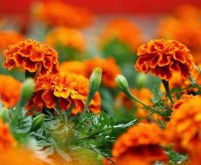В Харькове на Салтовке высадят 20 тысяч цветов