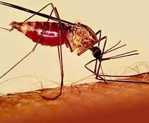 В Харьков завезли малярию