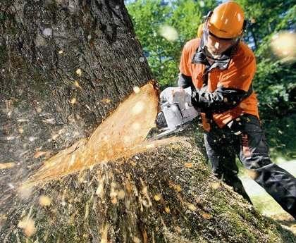 В Харькове троих мужчин привалило деревом