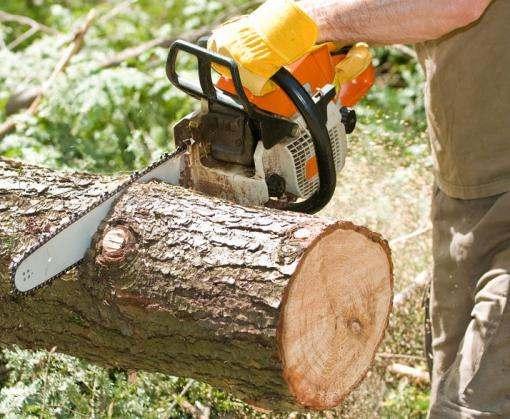 Под Харьковом браконьеры спилили деревьев на 200 тысяч