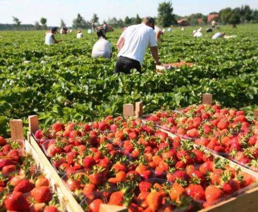В Польше работодателям придется платить налог за иностранных сезонных работников