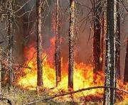 В Харьковской области сохраняется чрезвычайная опастность пожаров