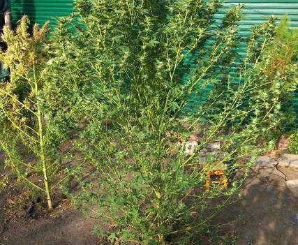 В траве сидел кузнечик: в харьковском дворе нашли 14 кило марихуаны