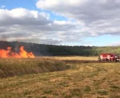 Под Харьковом сгорели 10 гектаров