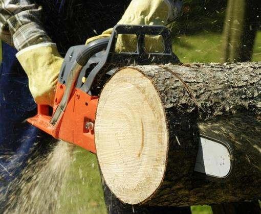 В Харькове собираются сносить аварийные деревья: где будет запрещено движение