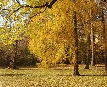 Погода в Харькове: потеплеет, чтобы похолодаать
