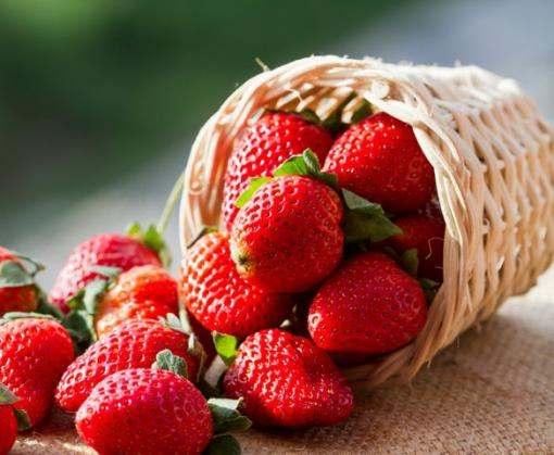 Украина за последние пять лет утроила экспорт ягод в страны Евросоюза