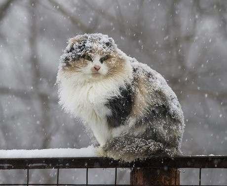 Погода в Харькове: ожидается снег
