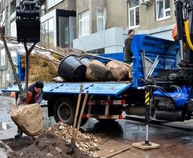 В Харькове до конца года посадят еще около двух тысяч деревьев