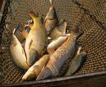В Харьковской области запретили ловить рыбу