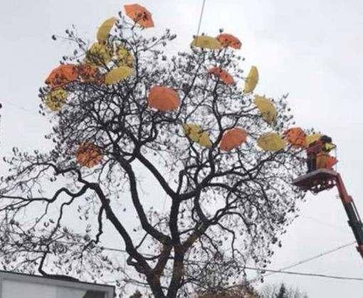 В центре Харькова появилось необычное дерево