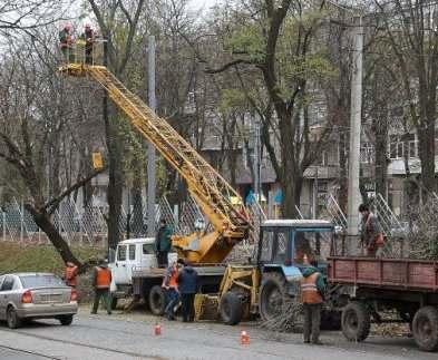В Харькове занялись аварийными деревьями