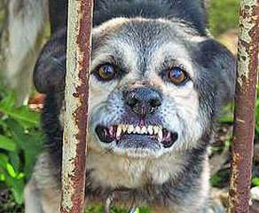 В Харьковской области бешеная собака искусала людей