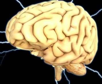 Почему стареет мозг
