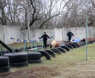 В Харькове появились патрульные-кинологи: видео